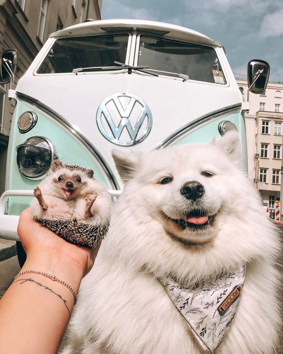 10 Of The Best Influencers Who Aren't Humans