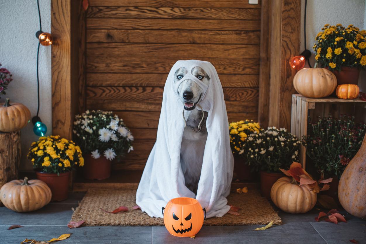 22 Memes That Sum Up Halloween In Australia
